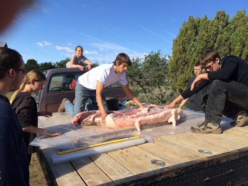 Students stay very engaged near the end of the process of harvesting a hog